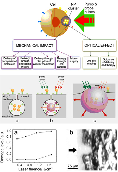 medical applications of nanobubbles Electromagnetics for biomedical engineering electromagnetics for minimally invasive medical and welfare applications.